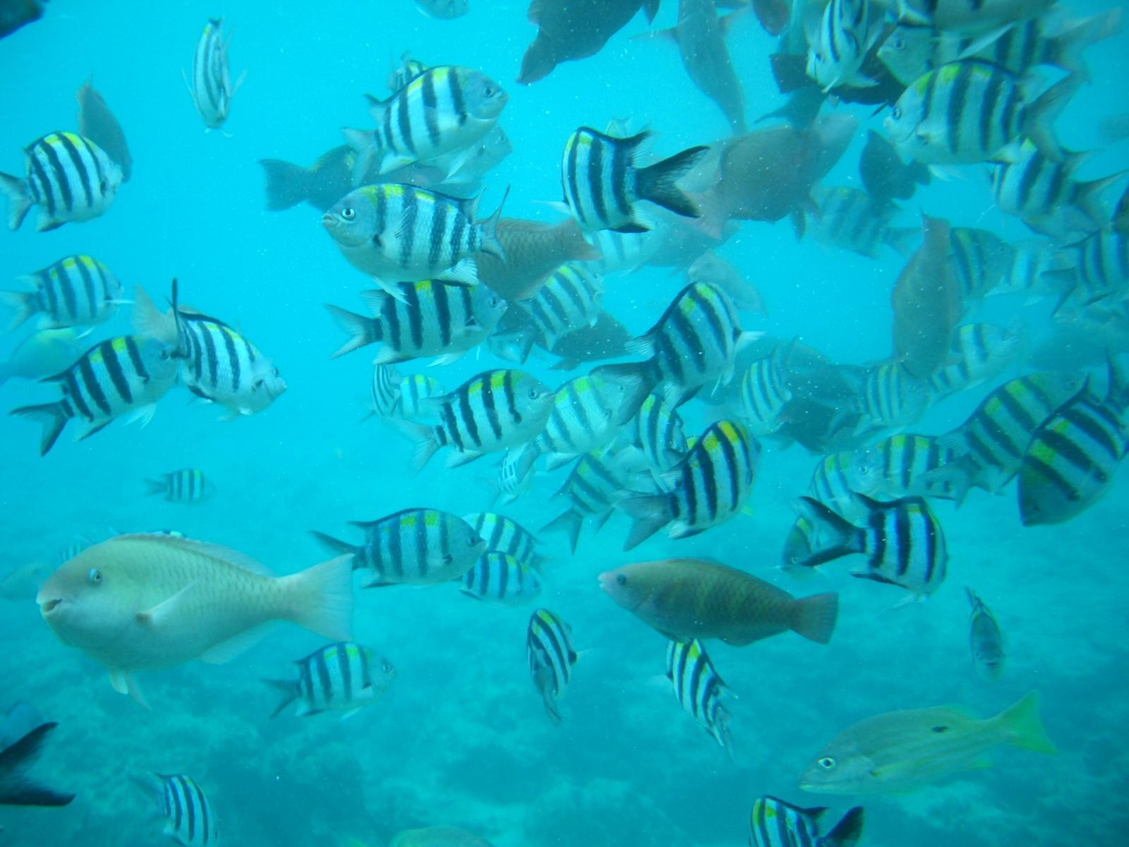 2010年3月30日沖縄ブセナテラスの海にて(旅行)