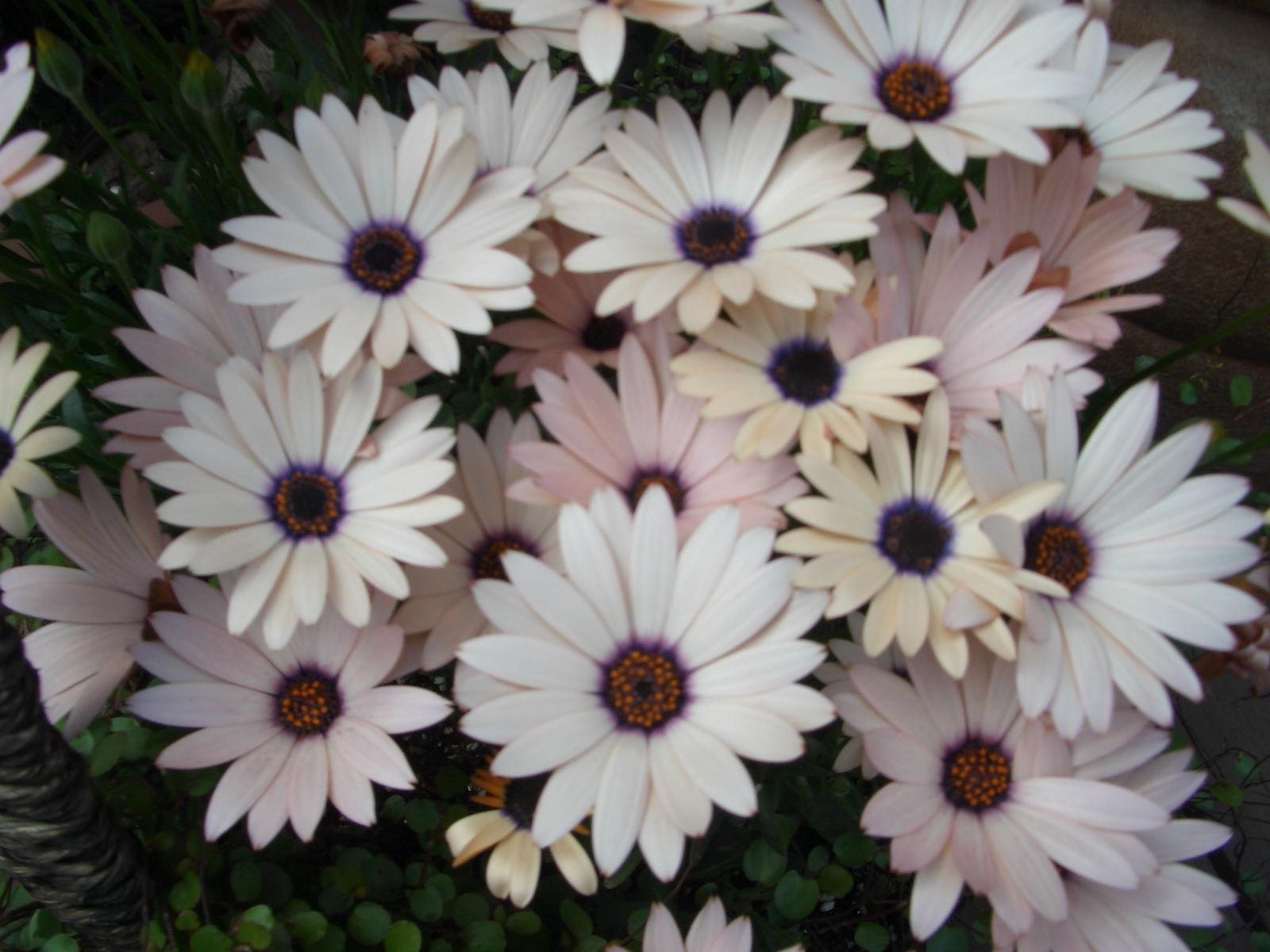 2007年4月 花